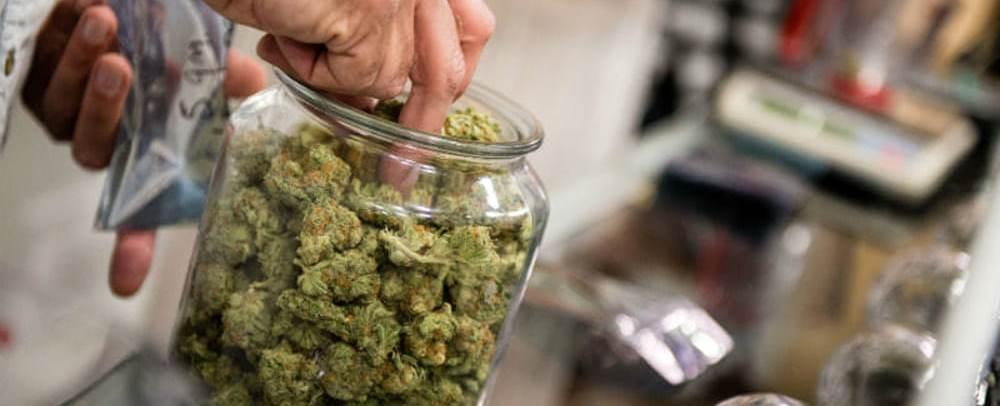 L'uso di Cannabis e la responsabilità degli operatori sanitari